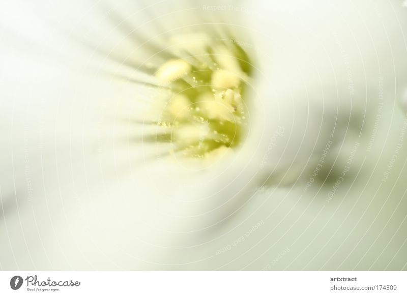 Nature White Flower Green Plant Summer Calm Yellow Relaxation Blossom Spring Dream Park Warmth Contentment Bright