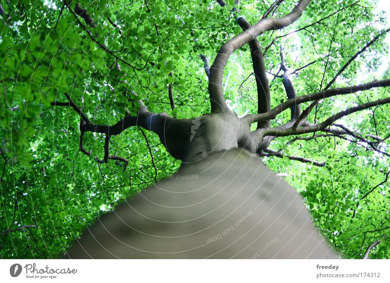 Nature Green Tree Plant Summer Leaf Animal Forest Environment Landscape Moody Park Weather Power Tall Fresh