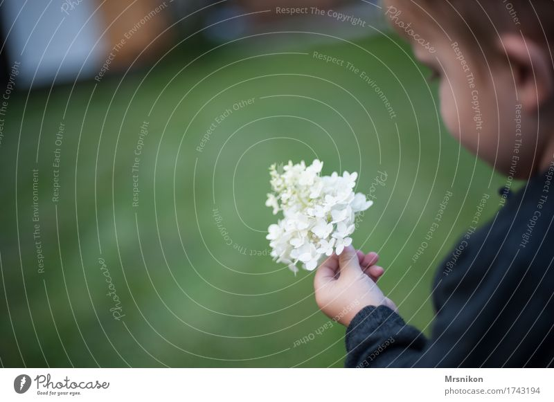 hydrangea Child Toddler Boy (child) Hand 1 Human being 1 - 3 years Stand To hold on Pick Flower Hydrangea Hydrangea blossom Blossom Panicle blossom Garden