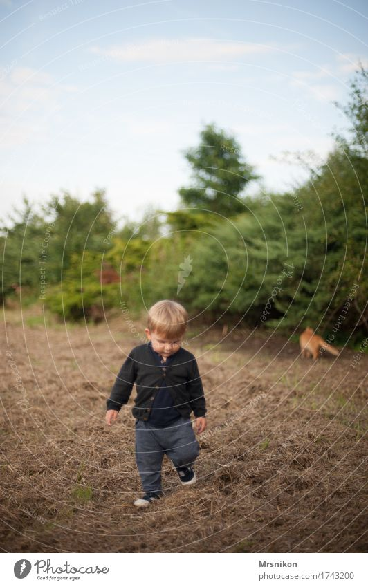 Together you're less alone Human being Child Toddler Boy (child) Infancy Life 1 1 - 3 years Nature Summer Beautiful weather Cat Animal Walking Looking Field