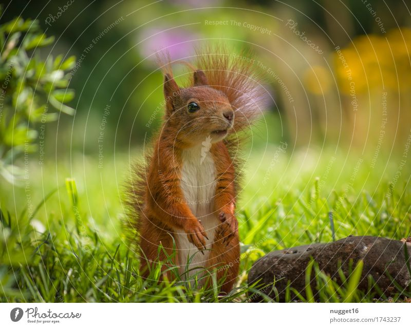 my little friend Nature Animal Grass Bushes Garden Meadow Wild animal Animal face Pelt Claw Paw Squirrel 1 Baby animal Observe Looking Stand Esthetic