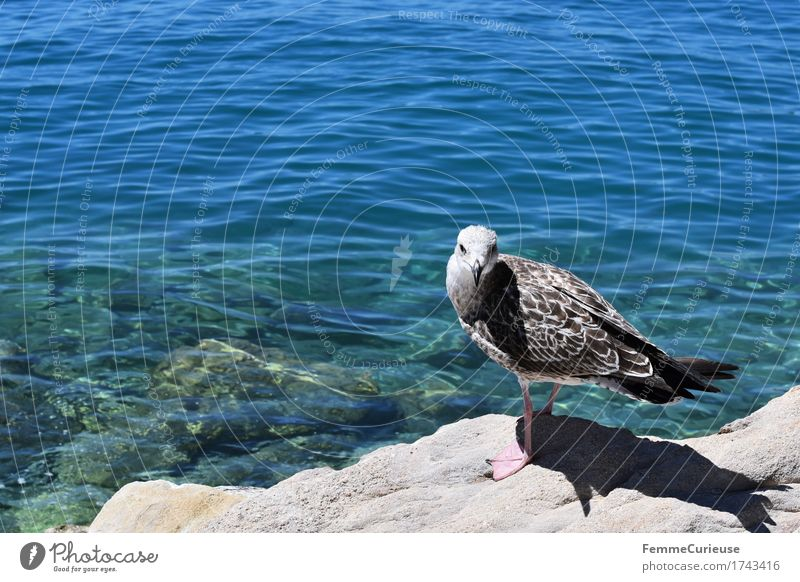 Croatia03. Nature Elements Water Animal 1 Looking into the camera Seagull Sea bird Ocean Adriatic Sea Clarity Bird Sun Summer Vacation & Travel Curiosity Rock