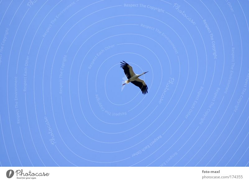 Nature Blue White Vacation & Travel Animal Black Environment Movement Bird Elegant Flying Wild animal Exceptional Observe Infinity Thin