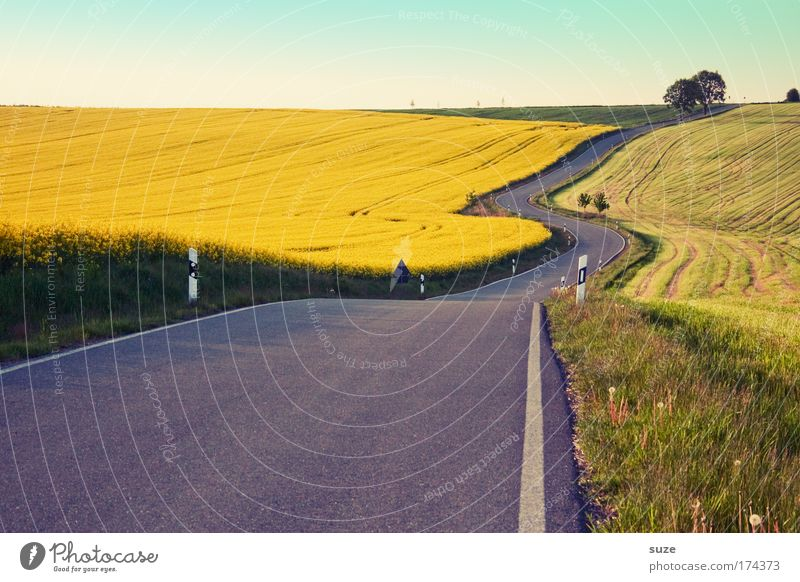 highway Trip Environment Nature Landscape Climate Agricultural crop Canola field Meadow Field Hill Transport Traffic infrastructure Street Lanes & trails Curve