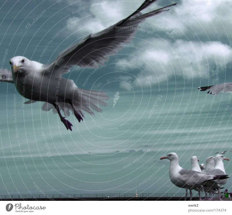 alpha Elegant Trip Freedom Summer Environment Nature Air Sky Clouds Climate Beautiful weather Wind Coast Animal Bird Wing Seagull Feather Group of animals Flock