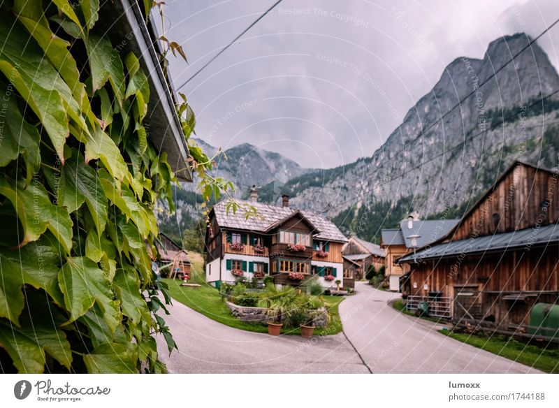 salzkammergut Nature Leaf Rock Alps Mountain Peak Austria House (Residential Structure) Dream house Hut Calm Wooden house Farm Geranium Salzkammergut