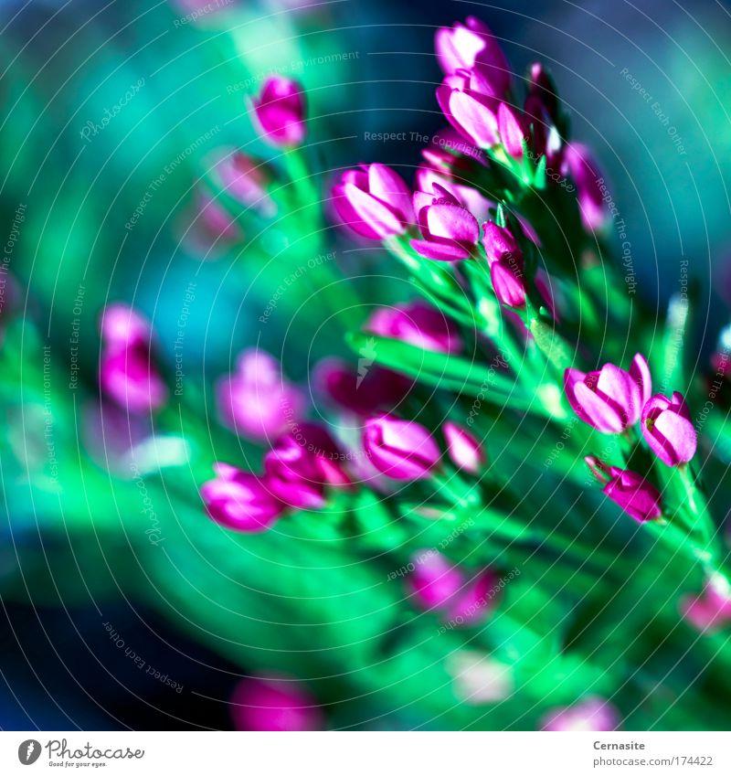 Lacrimosa Nature Blue Green Plant Summer Ocean Beach Environment Dark Warmth Coast Pink Wild Fresh Island Soft