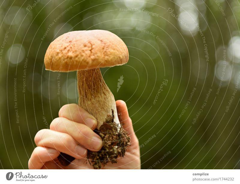 stone mushroom Food Boletus Mushroom Nutrition Lunch Picnic Organic produce Vegetarian diet Healthy Eating Vacation & Travel Summer Summer vacation Hand Fingers