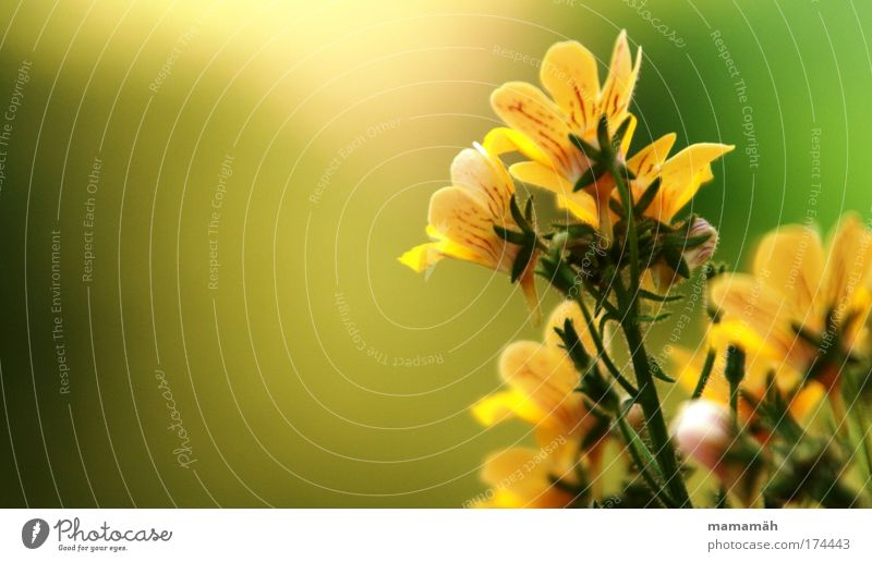Nature Beautiful Flower Green Plant Summer Yellow Blossom Fresh Happiness Growth Stalk Blossoming Summery Balcony plant