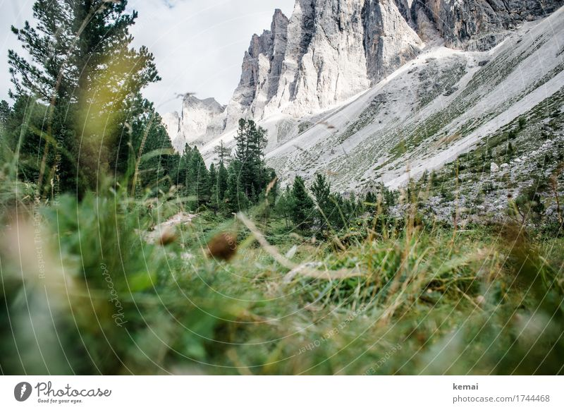 Inconspicuous detail, hiker. Life Mountain Hiking 2 Human being Environment Nature Landscape Plant Sky Summer Beautiful weather Tree Grass Rock Alps Dolomites