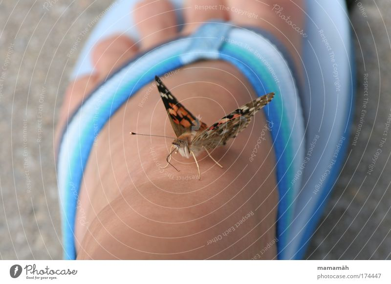 Hello there! Multicoloured Exterior shot Day Butterfly 1 Animal Flying Sit Curiosity Flip-flops Feet Toes Ground Judder Break Blue Painted lady Wing Hover