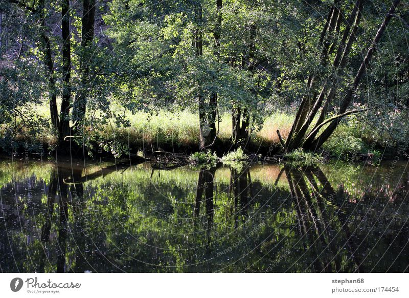 Nature Water Tree Sun Plant Summer Vacation & Travel Calm Forest Relaxation Meadow Grass Warmth Landscape Contentment Trip