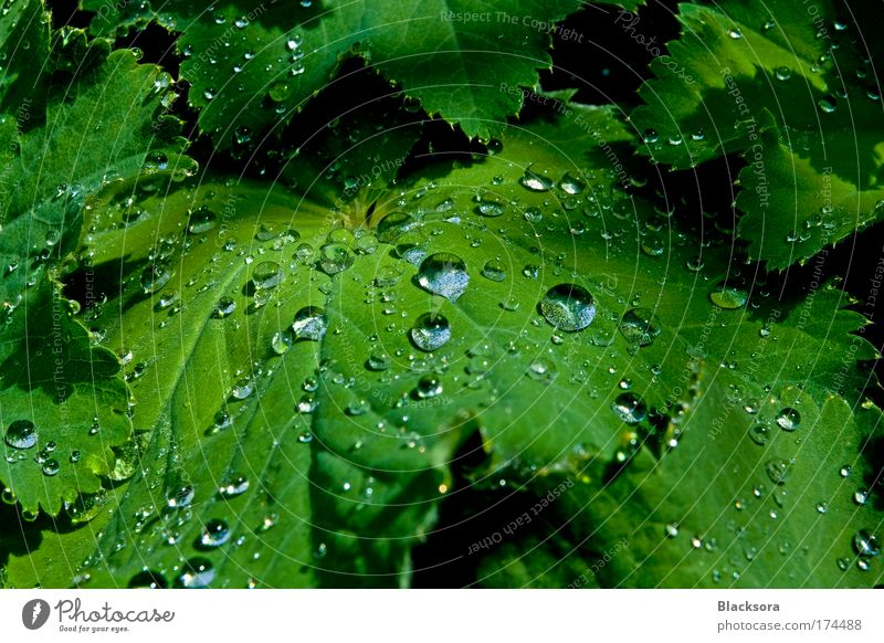 Nature Green Plant Summer Calm Leaf Animal Park Rain Moody Weather Drops of water Water Serene Thunder and lightning Foliage plant