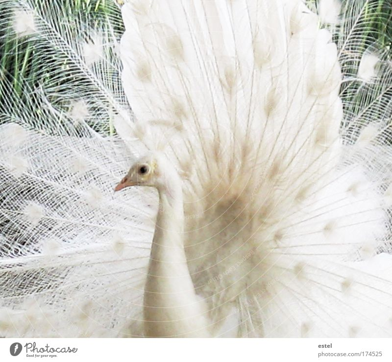 The white dream Colour photo Subdued colour Exterior shot Close-up Detail Deserted Day Animal portrait Looking Looking into the camera Nature Wild animal Bird
