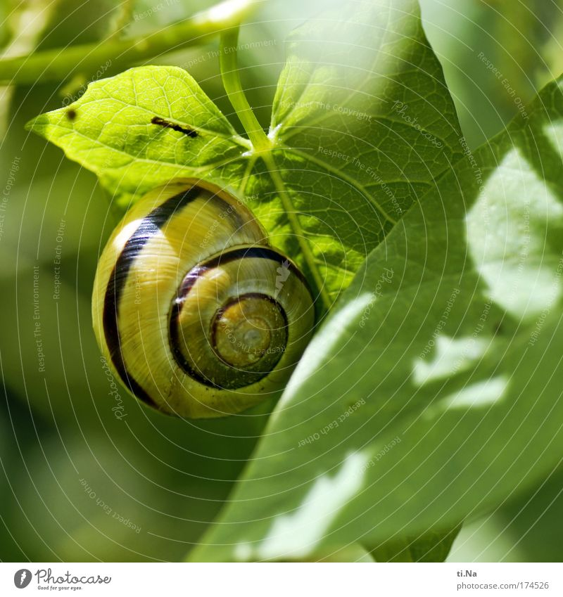 mobile living in the countryside Colour photo Exterior shot Macro (Extreme close-up) Deserted Animal portrait Environment Nature Landscape Plant Creeper Park