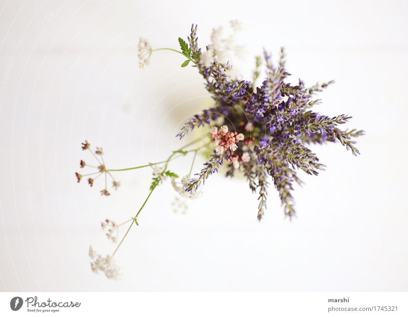 summer bouquet Nature Plant Flower Blossom Agricultural crop Garden Meadow Moody Summery Lavender Perspective Bird's-eye view Colour photo Interior shot