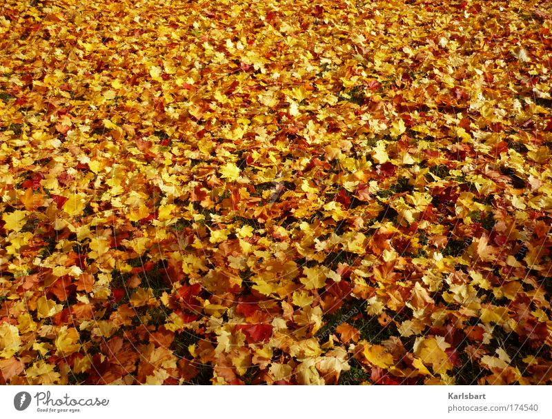 Nature Beautiful Tree Red Leaf Yellow Autumn Meadow Design Environment Gold Crazy Fresh Lie Transience Kindergarten