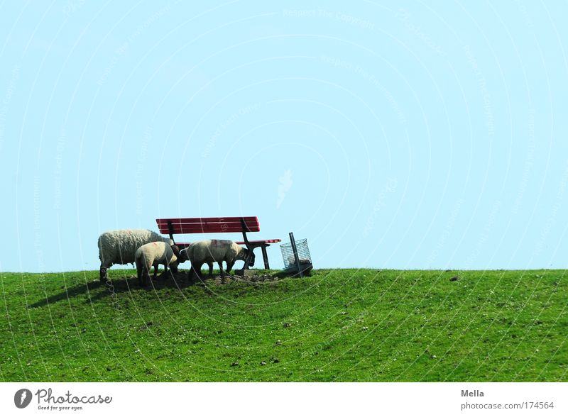Green Blue Summer Vacation & Travel Calm Animal Relaxation Meadow Grass Spring Landscape Contentment Together Coast Bench Stand
