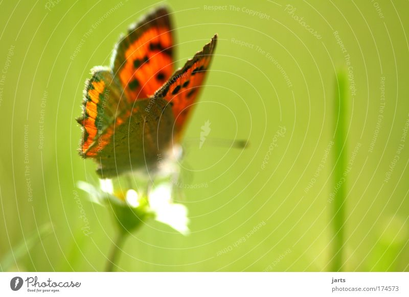 Nature Beautiful Plant Calm Animal Meadow Freedom Environment Natural Serene Butterfly Wild animal