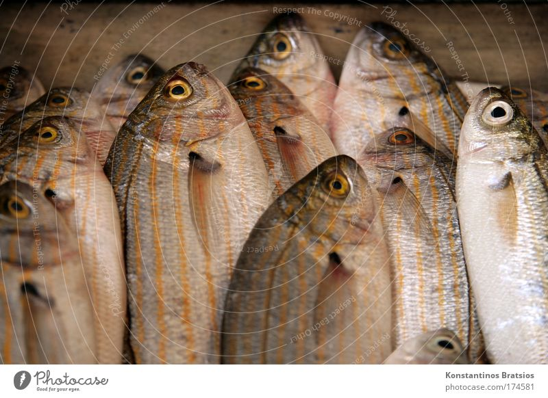 Ocean Eyes Nutrition Food Fresh Fish Group of animals Appetite To enjoy Delicious Fishing (Angle) Organic produce Quality Fisherman Mediterranean sea Fin