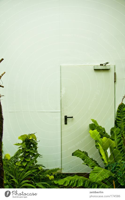 Green Plant Garden Room Door Entrance Palm tree Door handle Way out Oxygen Nature reserve