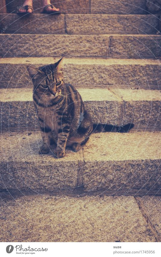 Cat Animal Natural Feet Wild Stairs Authentic Retro Cute France Animalistic Pet Barefoot Domestic cat Southern Expectation