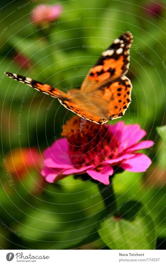 Beautiful Flower Green Plant Summer Nutrition Animal Blossom Freedom Moody Pink Elegant Environment Esthetic Wing