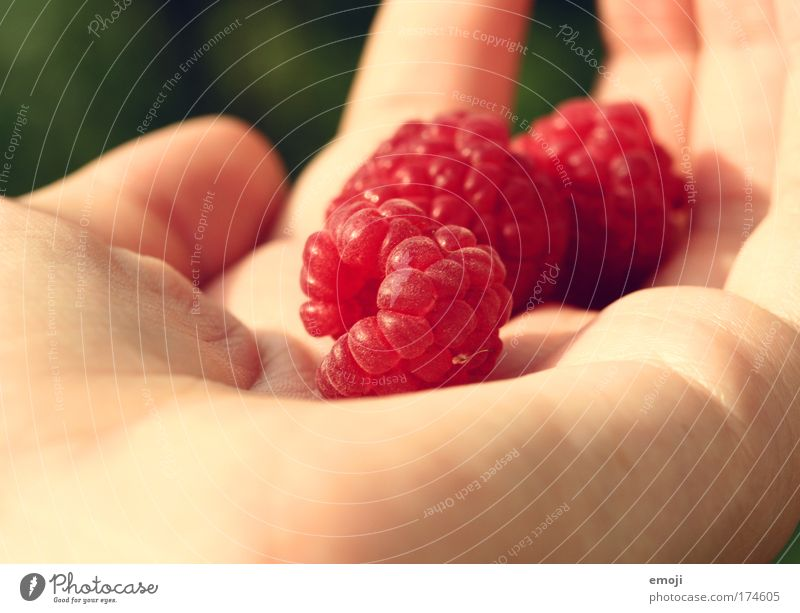 Fruit I Colour photo Multicoloured Exterior shot Close-up Detail Macro (Extreme close-up) Day Shallow depth of field Nature Delicious Sweet Red Raspberry Hand