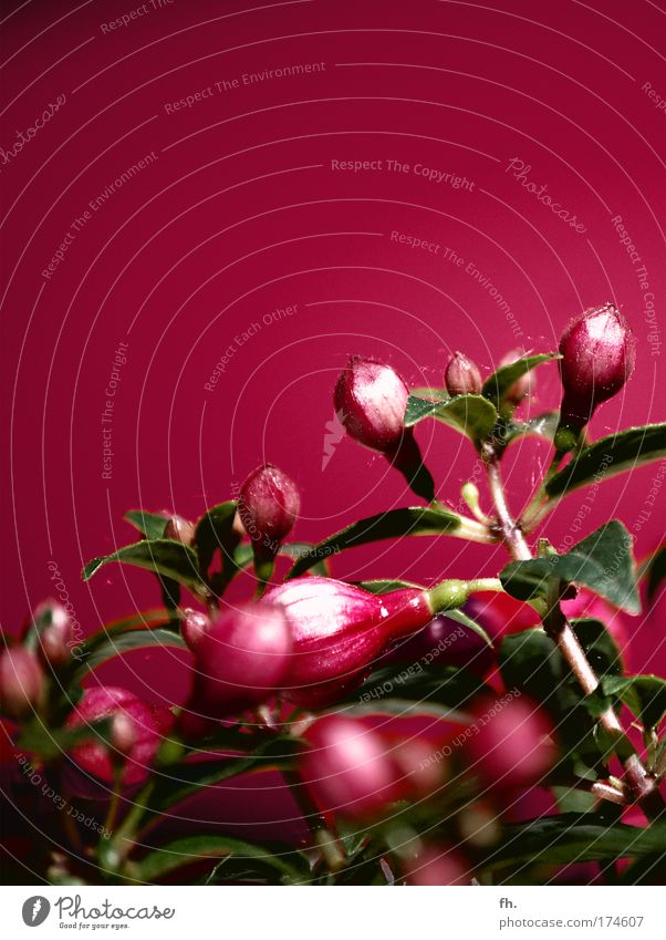Beautiful Flower Green Plant Red Calm Colour Blossom Power Glittering Pink Esthetic Retro Kitsch Decoration Exceptional
