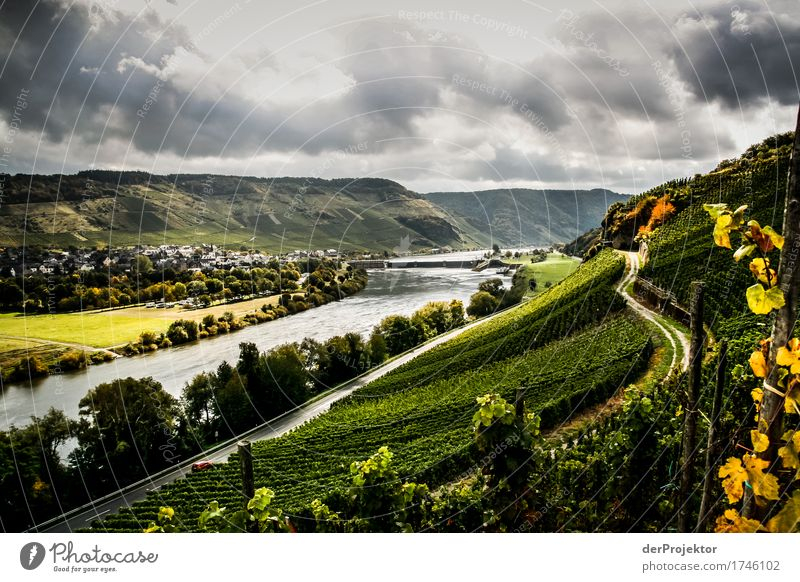 Light and shadow plays on the Moselle Vacation & Travel Tourism Trip Far-off places Freedom Sightseeing Mountain Hiking Environment Nature Landscape Plant