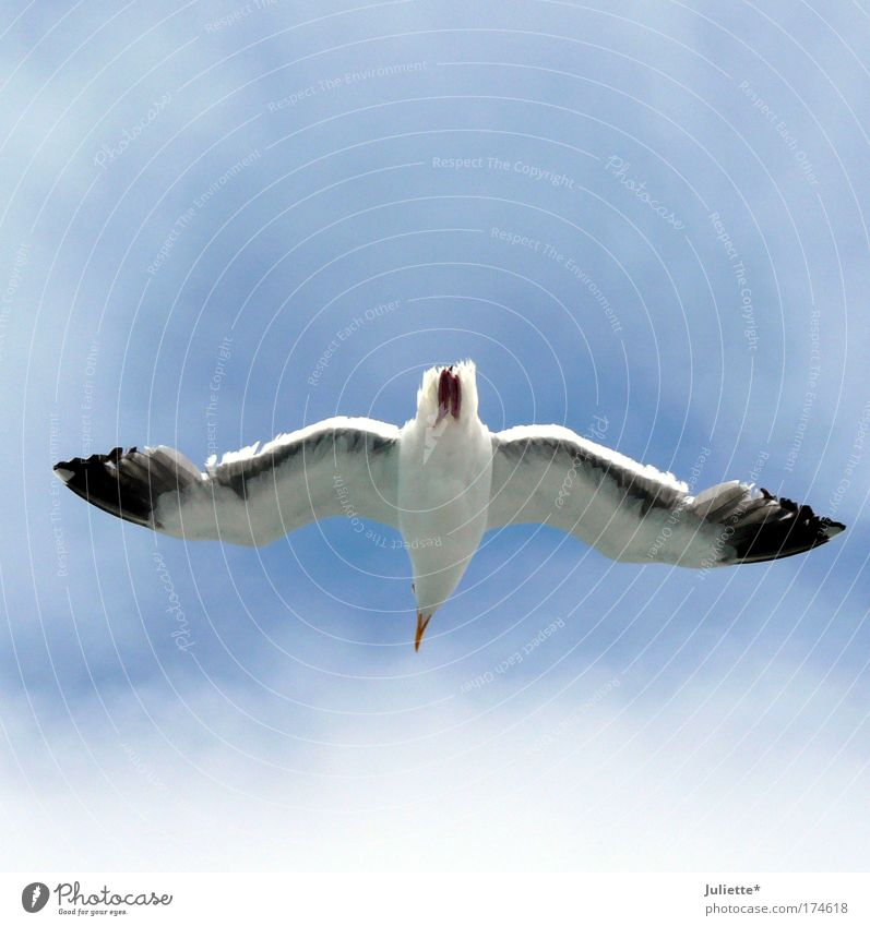 Keep the overview! Colour photo Exterior shot Day Sunlight Upward Nature Air Sky Summer Beautiful weather Animal Wing Seagull 1 Free Infinity Near Natural Blue
