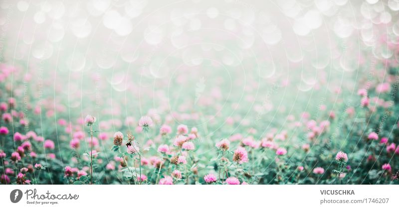 Meadow with flowering clover Lifestyle Design Summer Environment Nature Landscape Plant Beautiful weather Flower Blossom Garden Park Field Flag Soft Pink Style