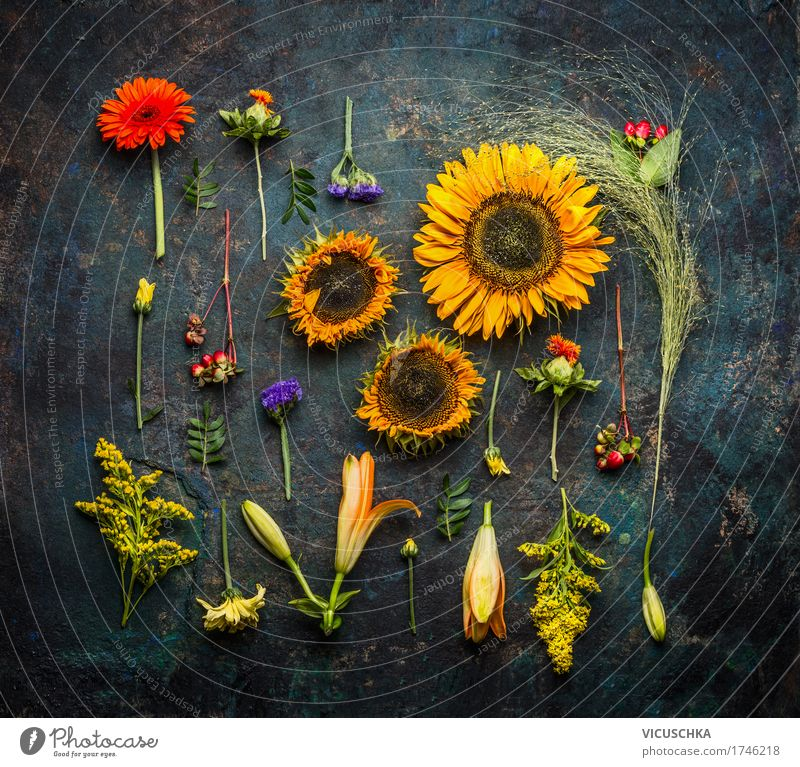 Various autumn plants and sunflowers Lifestyle Style Design Nature Plant Summer Autumn Flower Bushes Leaf Blossom Still Life flat lay Sunflower Dark