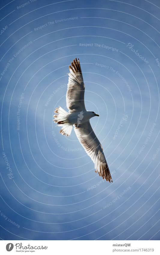 Nature Environment Flying Air Esthetic Wind Feather Wing Seagull Ease Blue sky Gull birds Seagull droppings