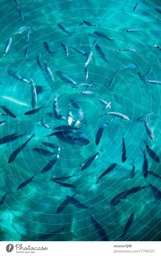 Fish. Art Esthetic Fishery Fisherman Shoal of fish Ocean Surface of water Peaceful Many Summer vacation Vacation photo Colour photo Multicoloured Exterior shot