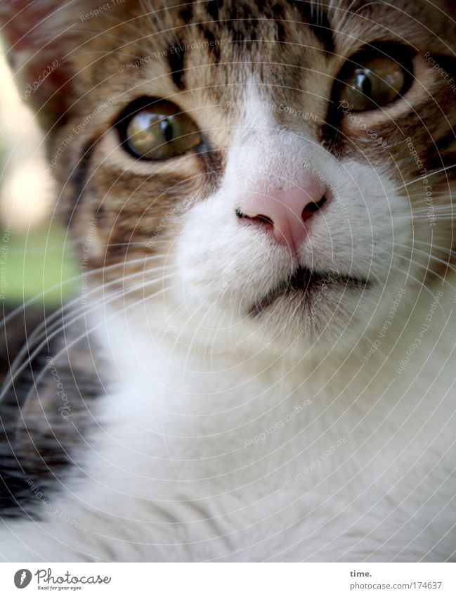 Beautiful Animal Eyes Curiosity Pelt Facial hair Brash Cat Striped Snout Domestic cat Thief Tiger skin pattern Criminal Big cat