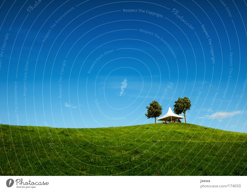 Human being Software Nature Tree Joy Summer Calm Meadow Landscape Grass Park Background picture Hiking Lifestyle Hill Event