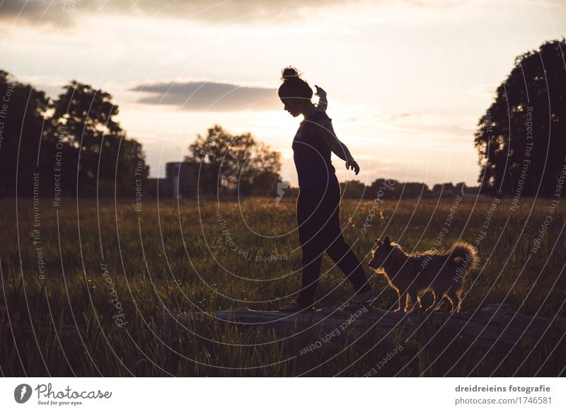 Woman Dog Nature Summer Animal Adults Emotions Spring Meadow Natural Happy Going Friendship Park Elegant Joie de vivre (Vitality)