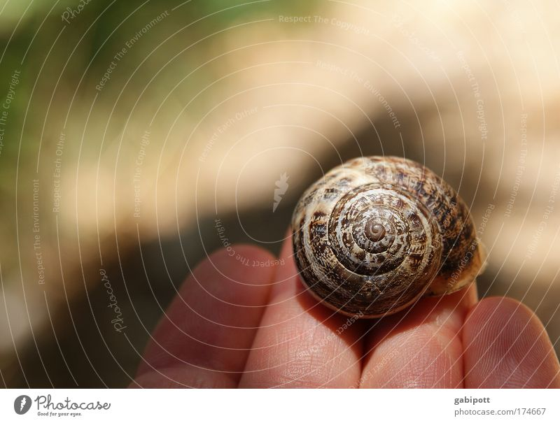 White Calm House (Residential Structure) Animal Happy Brown Together Circle Kitsch Protection Living or residing Infinity Natural Sign Serene Snail