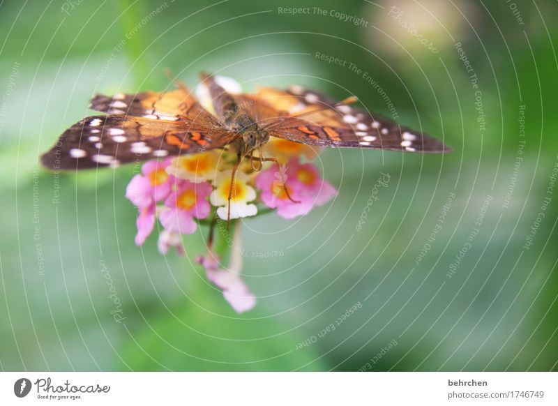 wings Nature Plant Animal Summer Flower Leaf Blossom Garden Park Meadow Wild animal Butterfly Animal face Wing Compound eye Legs Feeler 1 Observe Blossoming