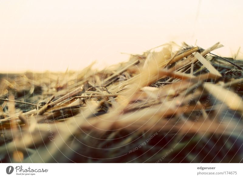 Nature Sun Plant Summer Animal Yellow Autumn Meadow Grass Warmth Field Blonde Gold Near Harvest Dry