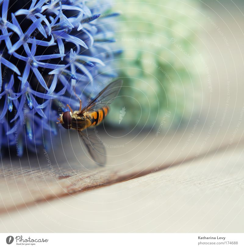 White Flower Green Blue Plant Red Nutrition Animal Life Garden Wood Contentment Flying Esthetic Wing Bee