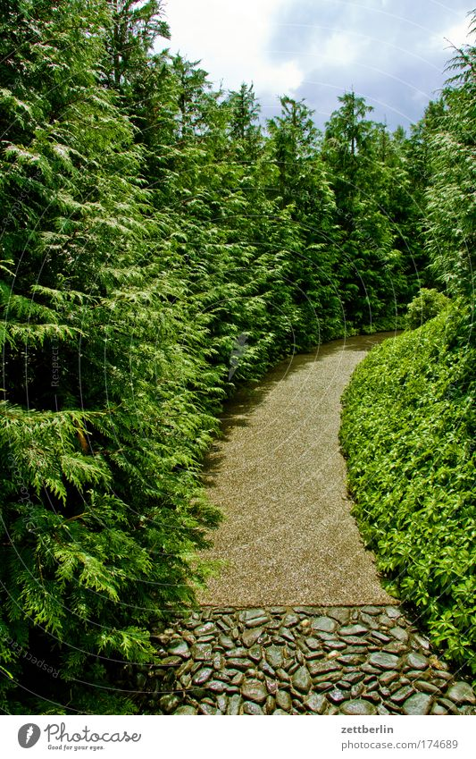 curve Park Garden Lanes & trails Curve Tree Grass Meadow Plant Avenue Relaxation Recreation area Vacation & Travel Oxygen Nature Sky Summer
