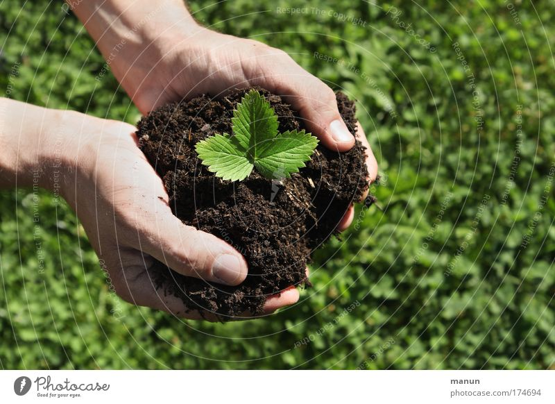 All hands full.... Food Fruit Nutrition Organic produce Vegetarian diet Gardening Hand Fingers Nature Earth Spring Summer Plant Agricultural crop Strawberry