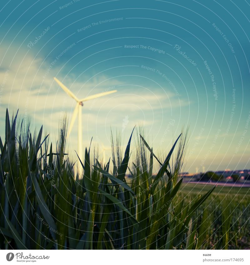 windmill Colour photo Exterior shot Deserted Copy Space top Day Organic produce Economy Industry Energy industry Advancement Future Renewable energy