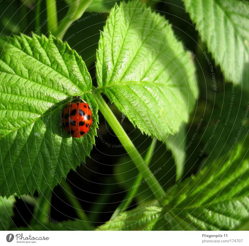 Nature Green Beautiful Red Plant Summer Calm Leaf Black Animal Happy Bright Contentment Warm-heartedness Ladybird Beautiful weather