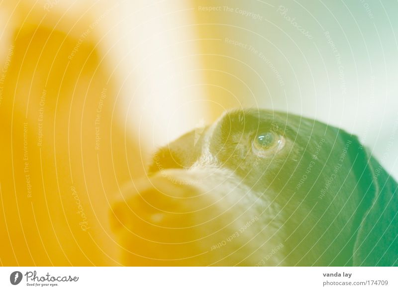 Green Eyes Animal Yellow Dog Orange Art Nose Crazy Multicoloured 1 Creativity Whimsical Pet Hip & trendy Photographic technology