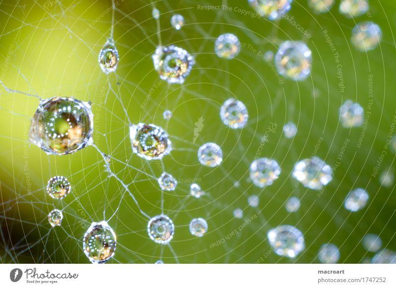 Nature Blue Green Natural Rain Drops of water Wet Drop Net Sphere Dew Spider's web