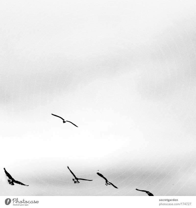 White Clouds Black Animal Dark Above Movement Air Small Bird Weather Together Elegant Flying Free Esthetic