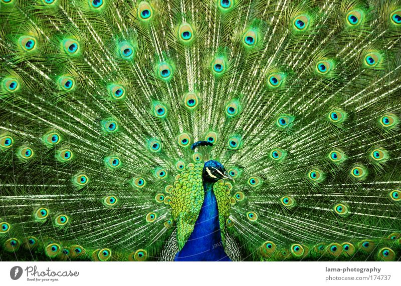 Blue Green Beautiful Animal Eyes Bird Emotions Glittering Elegant Pattern Feather Observe Kitsch Animal portrait Zoo